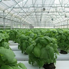 CO2 for Growth in Greenhouses from TCSCO2